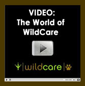 "Watch our video ""The World of WildCare"""
