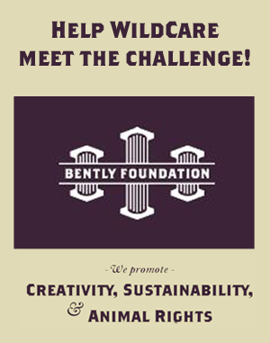 Help us meet the Bently Foundation challenge!