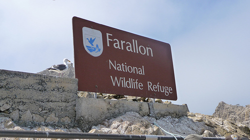 Farallon NWR. Photo from kqedquest