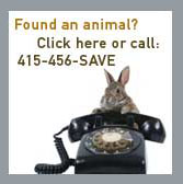 Found an animal? Click here or call: 415-456-SAVE